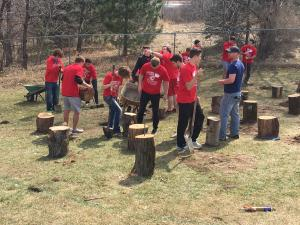 Students with shovels and wheelbarrow cementing in stumps