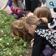 children looking at different types of plants