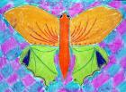 cms art butterfly photo